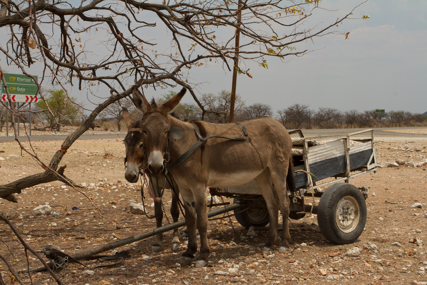 African bush taxi