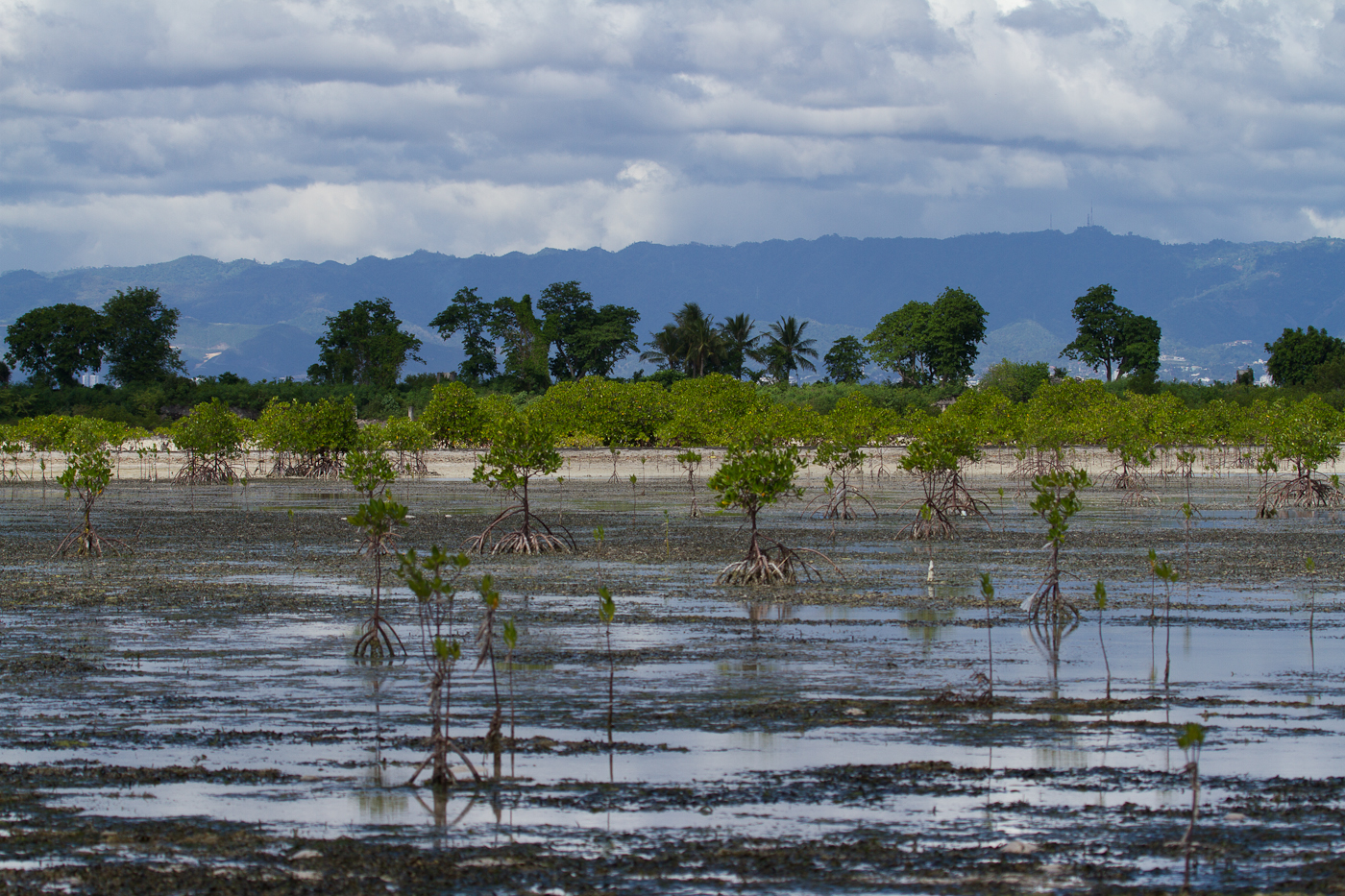 Low tide on Olango Island.