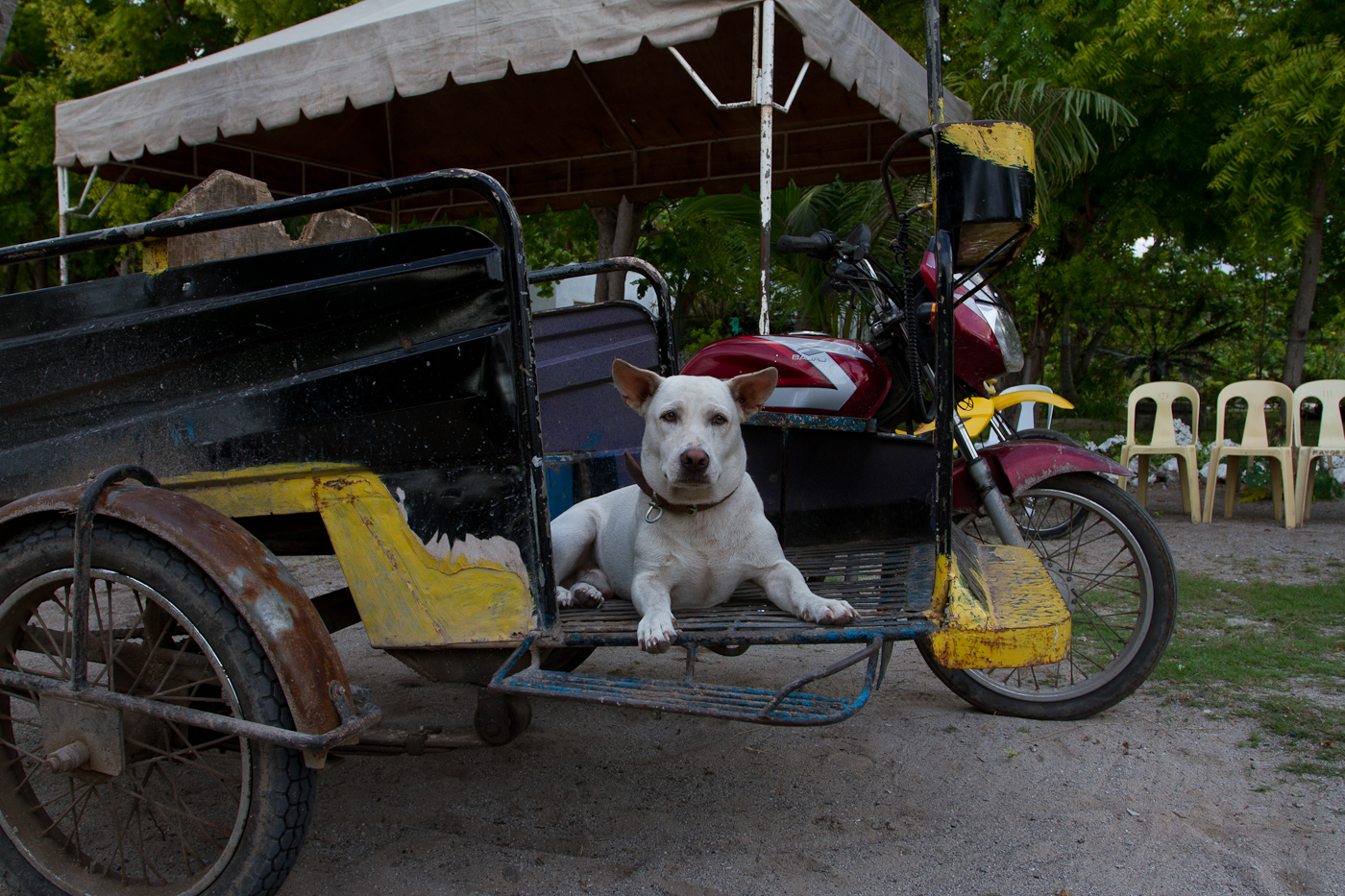 Our favorite mode of transport on Olango Island. This one comes with a free canine copilot!