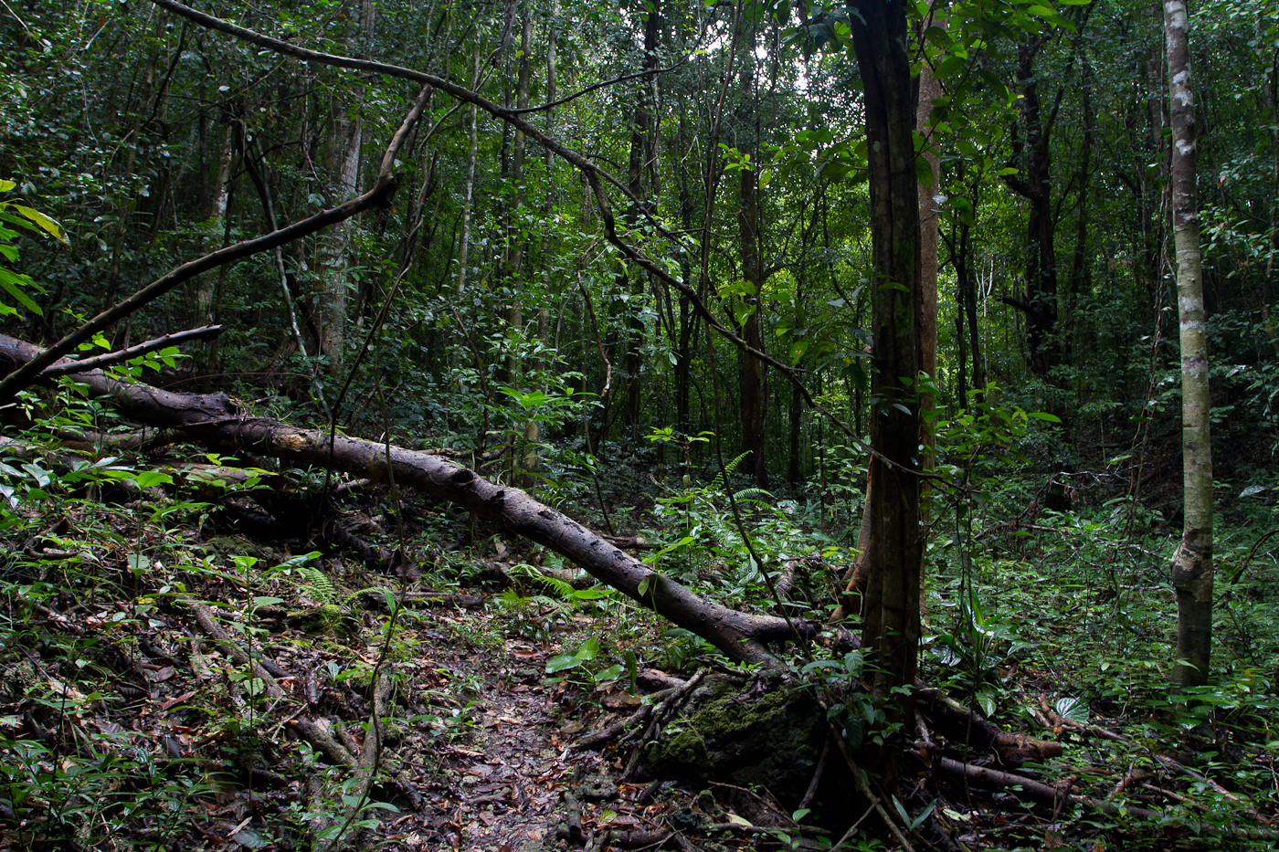 The forest of Raja Sikatuna Protected Landscape