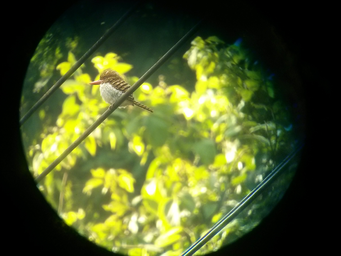 View through the scope at the Kingfisher