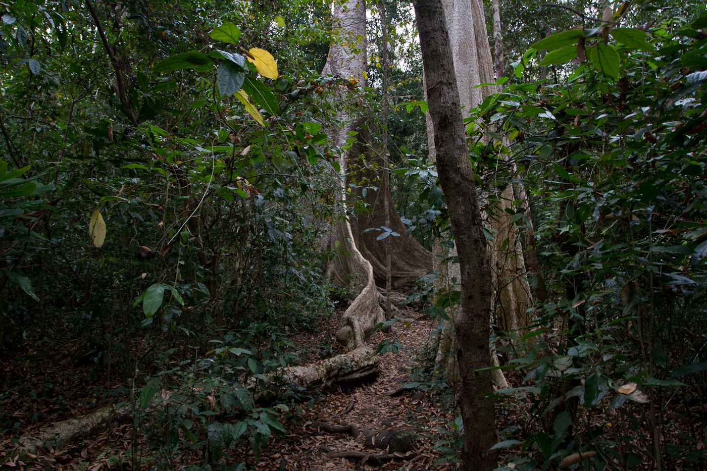 Path through the forest, Cat Tien