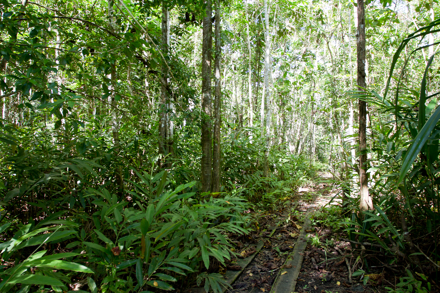 The old logging road in Nimbokrang, Papua, a stones through from the PNG border.