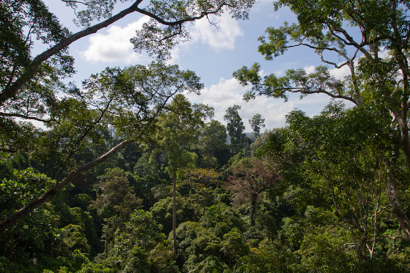 View over the Sepilok forest
