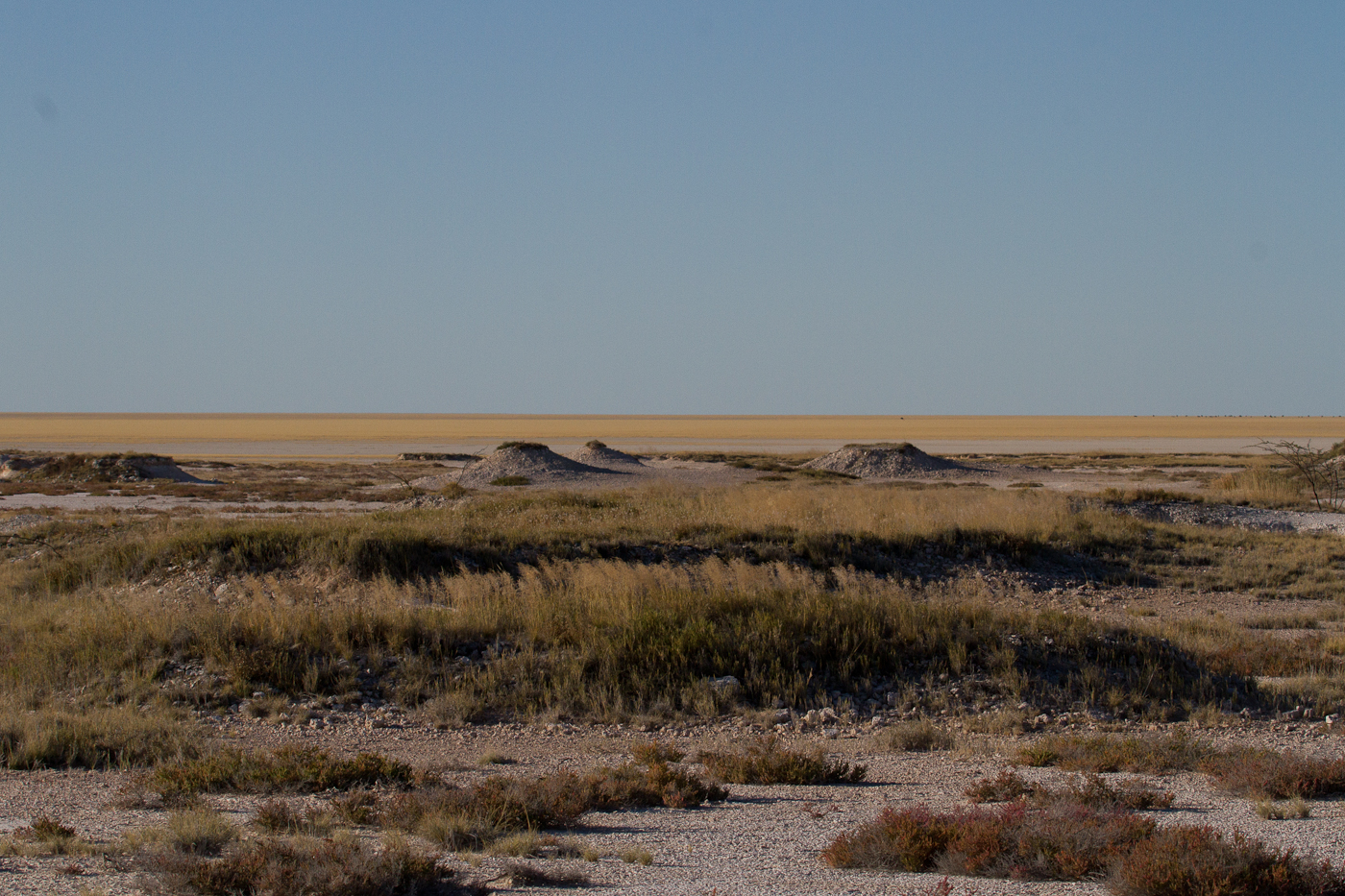An arid landscape in Etosha National Park
