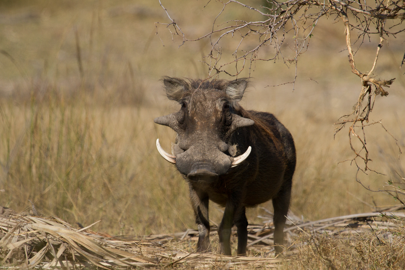 When I was a young warthog!