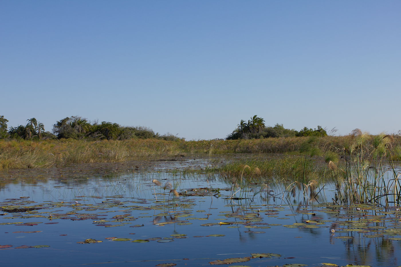 The realm of the fabled Tigerfish in the Okavango Panhandle