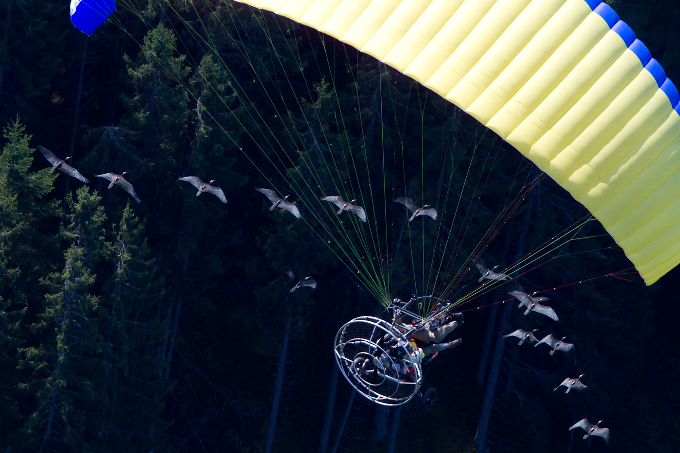 Ibis and ultralight, flying in formation