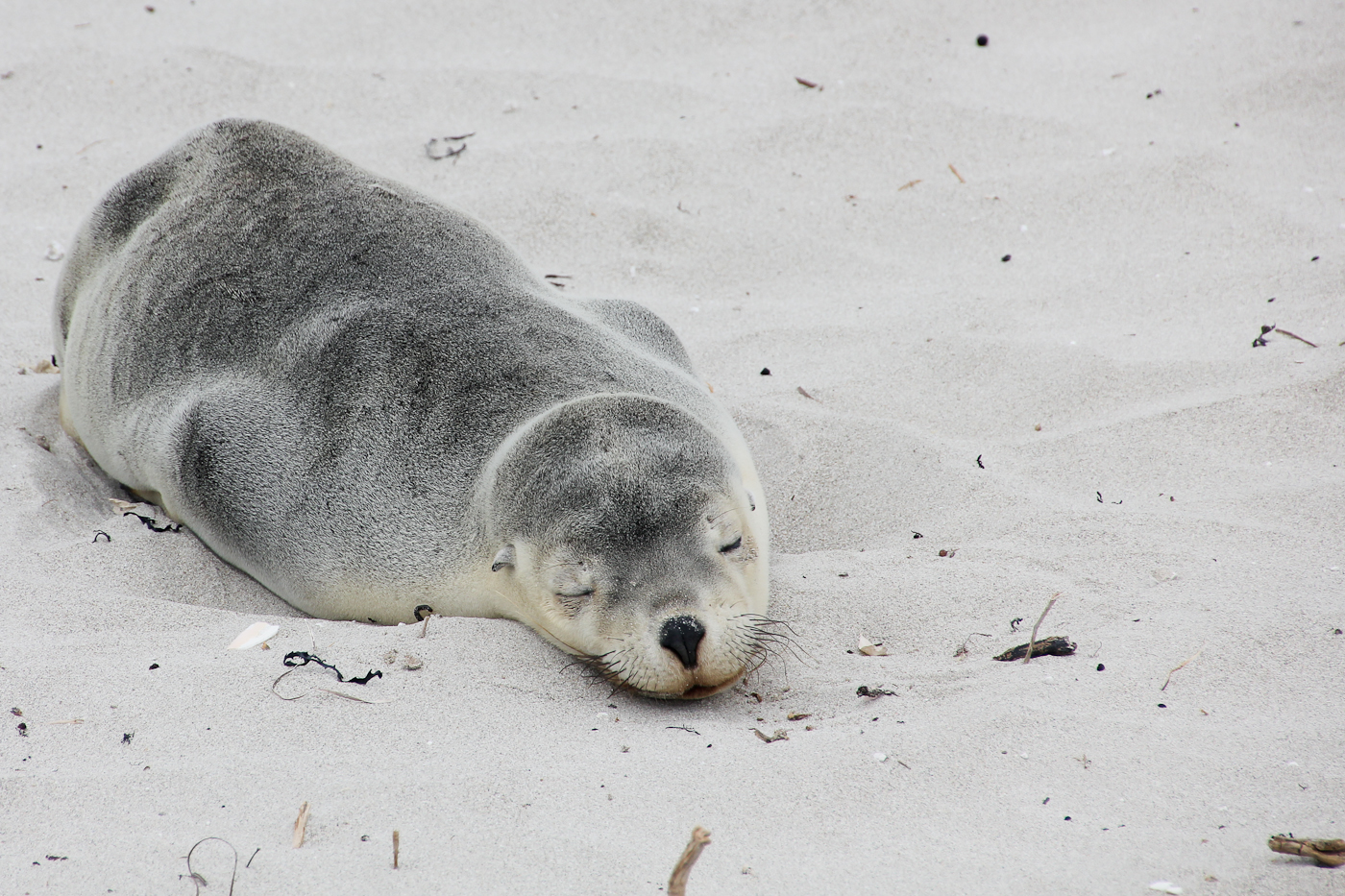 After days of fishing out at sea, this seal sleep it off.