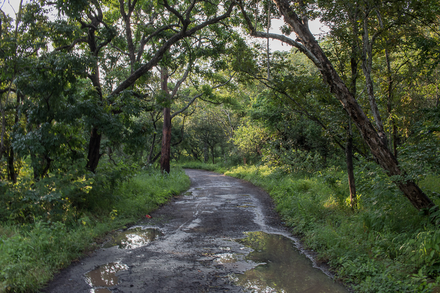 Wet roads after a heavy rain in Baluran National Park.