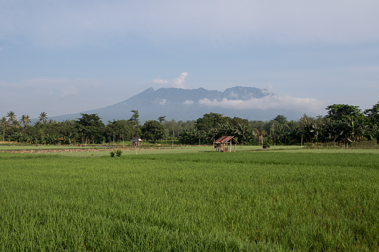 The edge of Baluran National Park, East Java.
