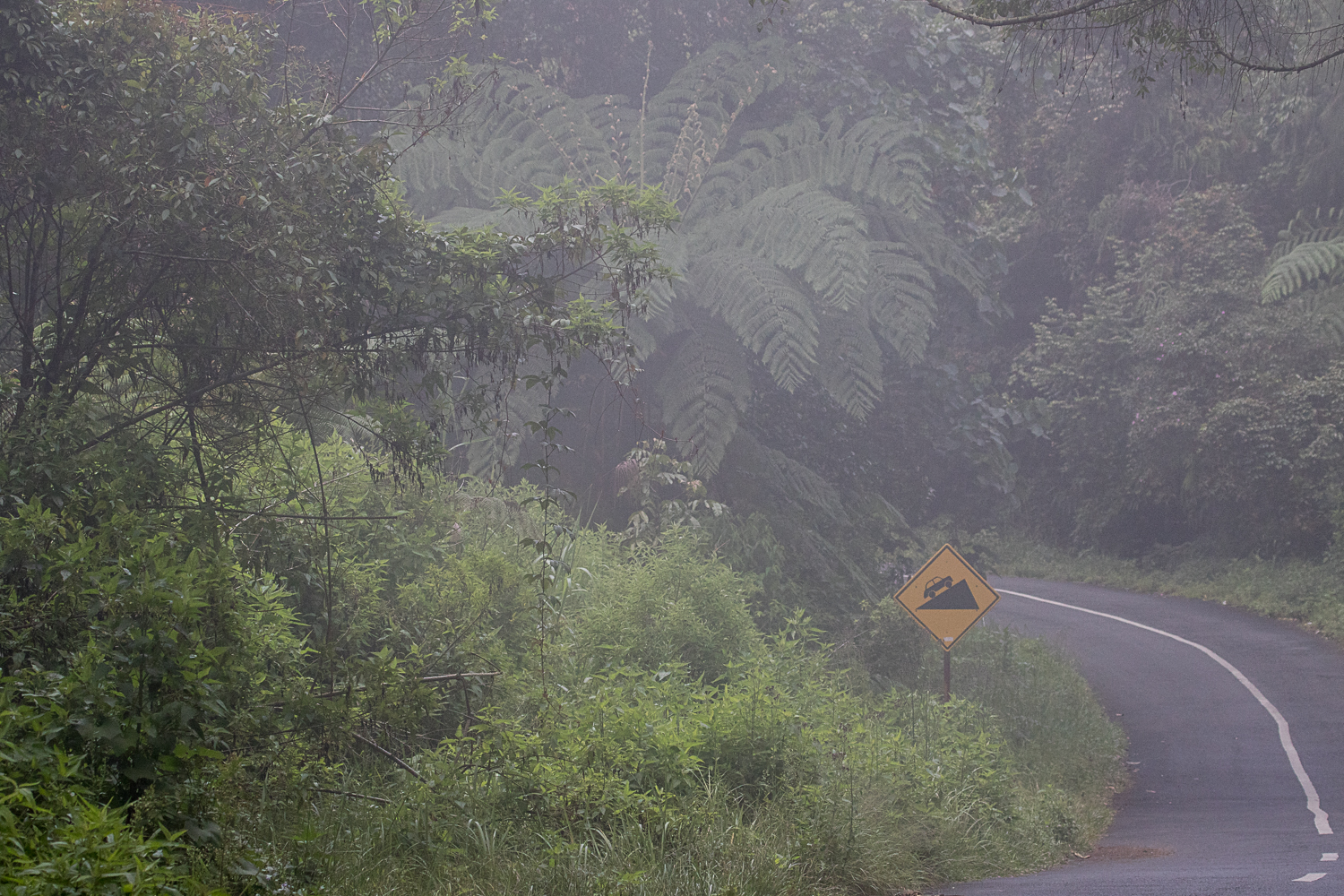 The road up to Mount Ijen is lush montane rainforest.