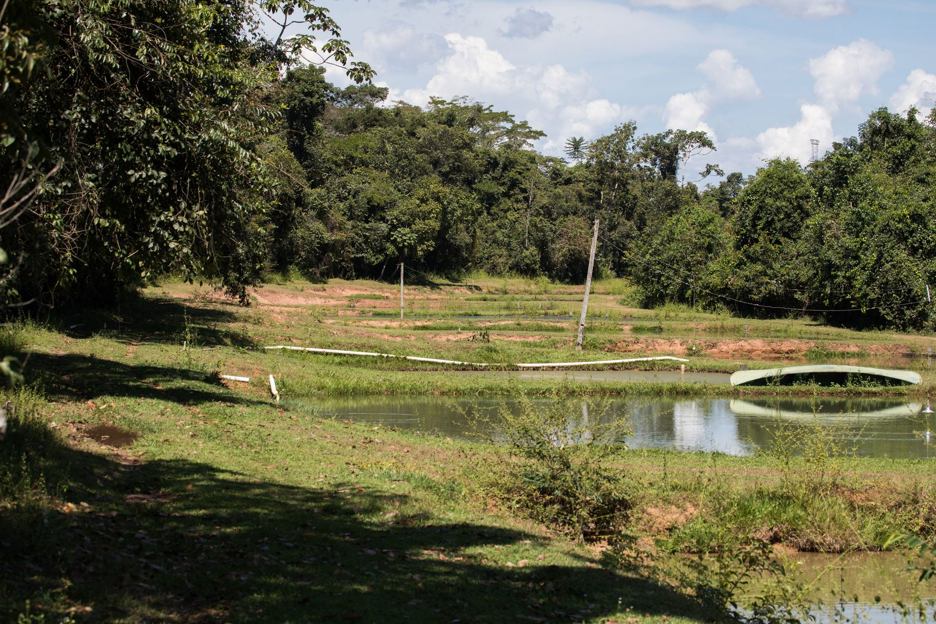 The fish farm at the Jardim Amazonia.